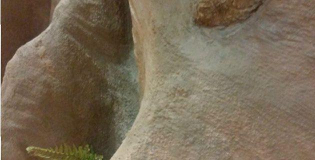 2018-04_神奈川県_大井松田_biotopia_エージング塗装_モルタル造形_大木造形工事_装飾工事_発泡ウレタン造形
